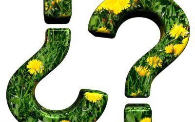 4 Questions to Ask a Landscaper