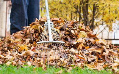 It's Not Too Early to Get Your Landscaping Ready for Spring